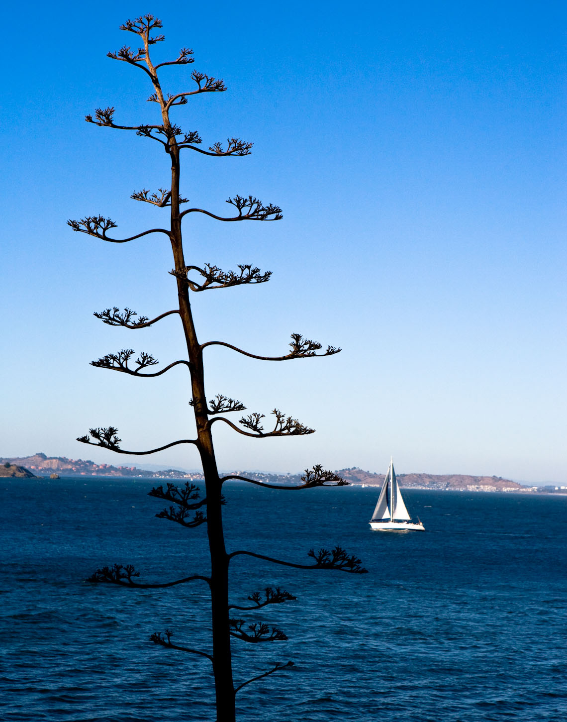 view-from-alcatraz-san-francisco.jpg